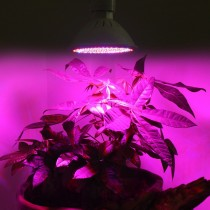 10pcs Led Plant Growing Lamp 12W E27 82Red:20Blue Grow Light SMD102 for grow box hydroponics system